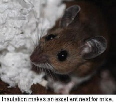 insulation-mice-img